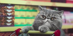 Netto cat commercial ending