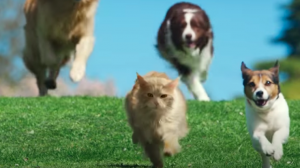 be more dog cat commercial scene
