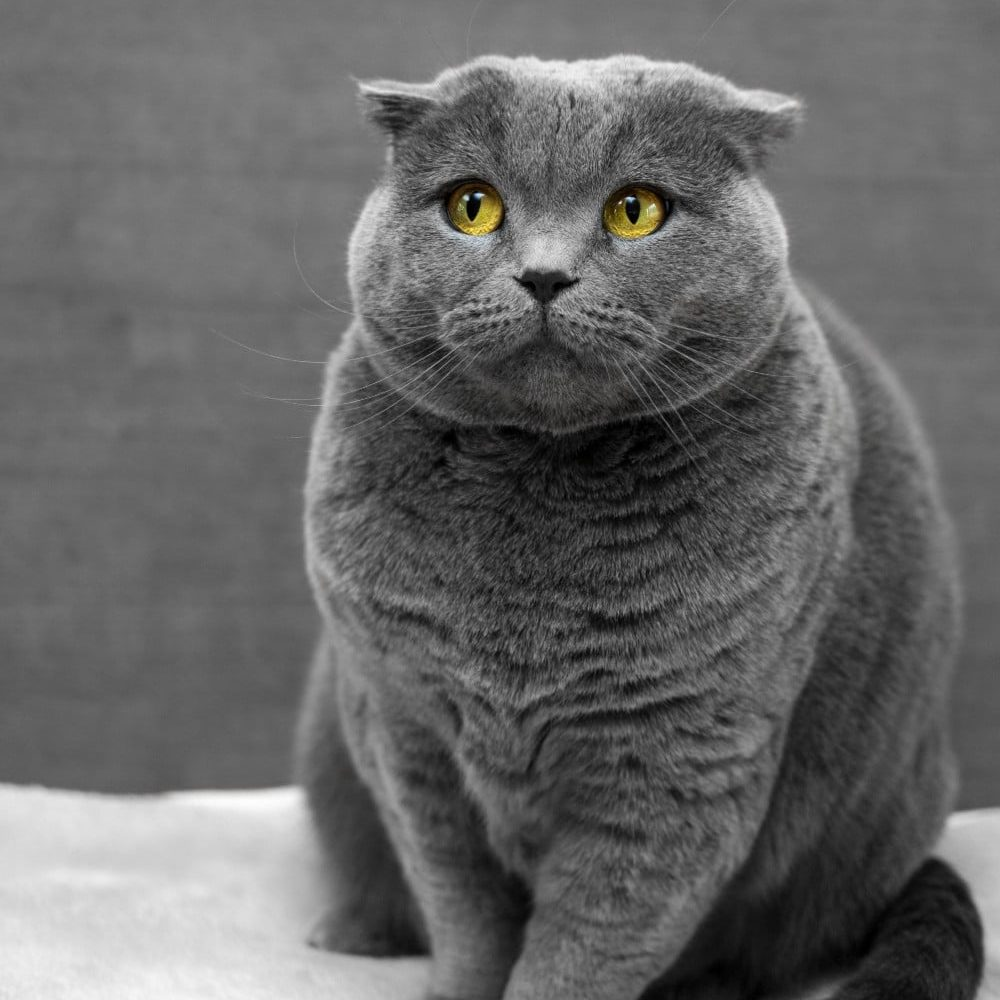 cat commercial: a gray cat is always pleasing to the eye, like this one!